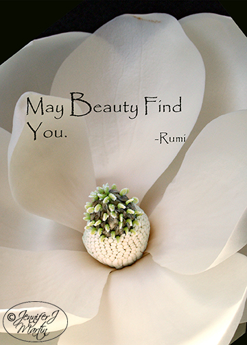 May Beauty Find You (Rumi Quote) - Magnolia Blossom