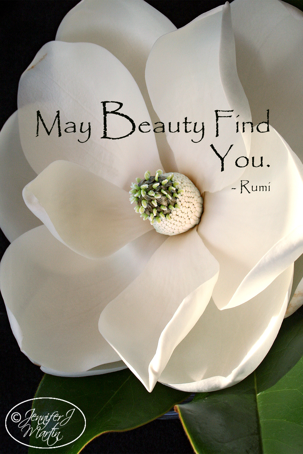 May Beauty Find You (Rumi Quote) Magnolia Blossom